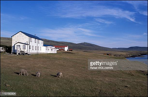 Years after the war in Falkland Islands in 2002 - In photo: San Carlos Farm.