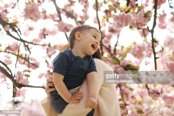 a 2 years old boy in the arms of his mum a flowered park - 2 3 years stock pictures, royalty-free photos & images