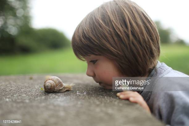 a 5 years old boy observing a snail - invertebrate stock pictures, royalty-free photos & images