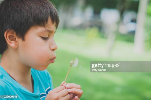 8 years old boy playing with a dandelion flower blowing the seeds. - 8 9 years stock pictures, royalty-free photos & images