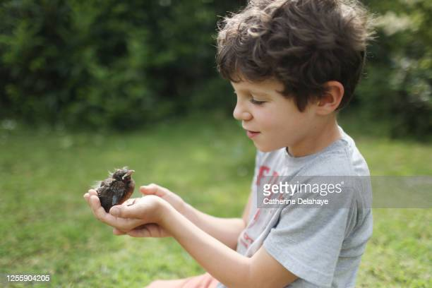 a 9 years old boy taking care of a baby bird - 8 9 years stock pictures, royalty-free photos & images