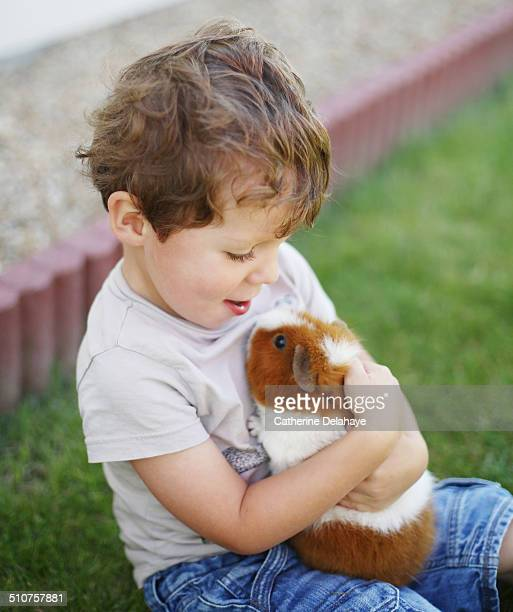 a 3 years old boy with a hamster - guinea pig stock pictures, royalty-free photos & images