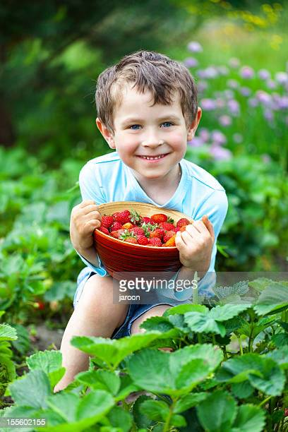 5 years old boy with fresh strawberries - 4 5 years stock pictures, royalty-free photos & images