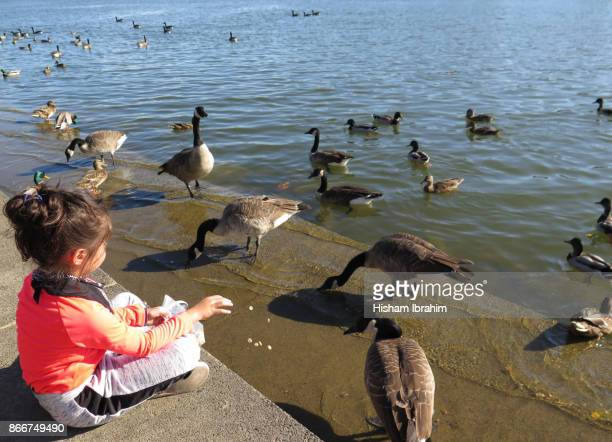 5 years old girl feeding ducks in georgetown harbor, washington dc. - 4 5 years photos stock pictures, royalty-free photos & images