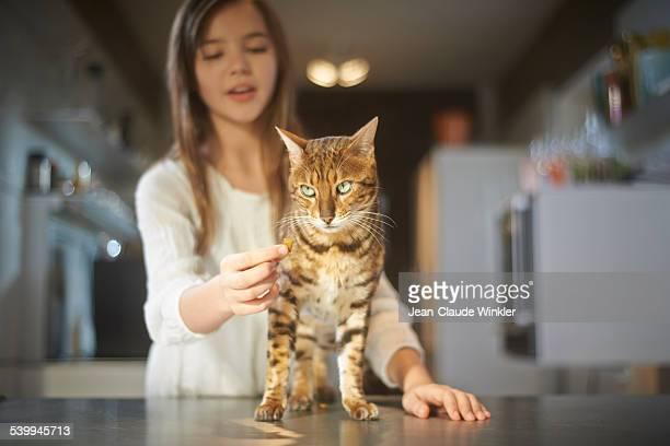 11 years old girl in kitchen with cat - bengal cat stock pictures, royalty-free photos & images