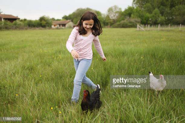 a 10 years old girl running with hens in the countryside - 10 11 years stock pictures, royalty-free photos & images