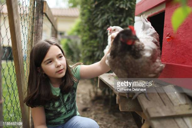 a 10 years old girl taking care of chicken in a henhouse, in the countryside - 10 11 years stock pictures, royalty-free photos & images