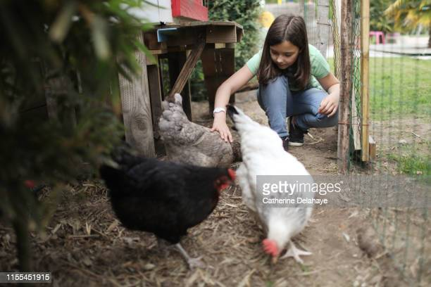 a 10 years old girl taking care of hens in the countryside - 10 11 years stock pictures, royalty-free photos & images