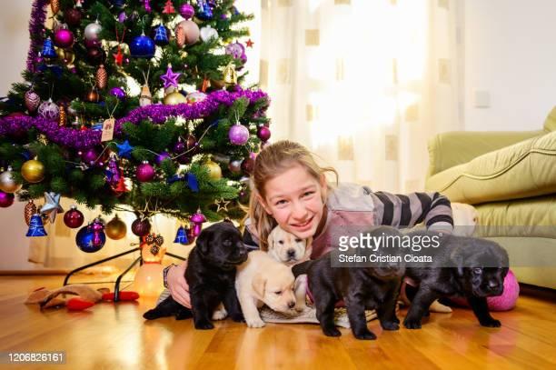 11 years old girl with labrador puppies - cristian neri foto e immagini stock