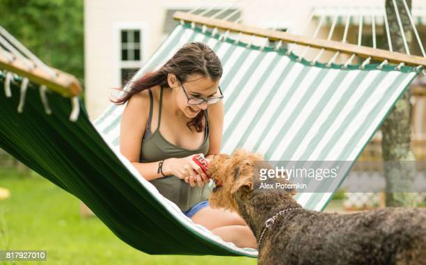 15 years old teenager girl lying in the hammock and playing with her airedail terrier dog. - 14 15 years stock pictures, royalty-free photos & images