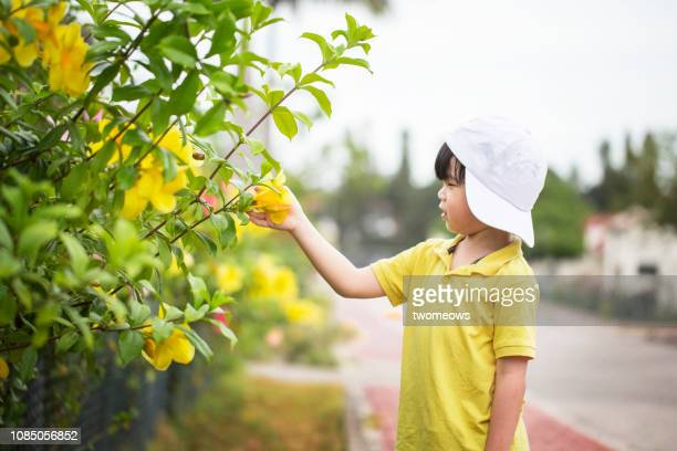 5 years old young boy looking at blooming flowers. - 4 5 years stock pictures, royalty-free photos & images