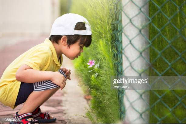 5 years old young boy smelling wild flower. - 4 5 years stock pictures, royalty-free photos & images