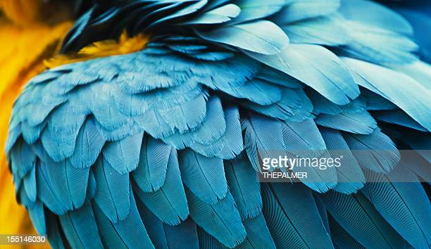 yellow and blue macaw feathers - feather stock pictures, royalty-free photos & images