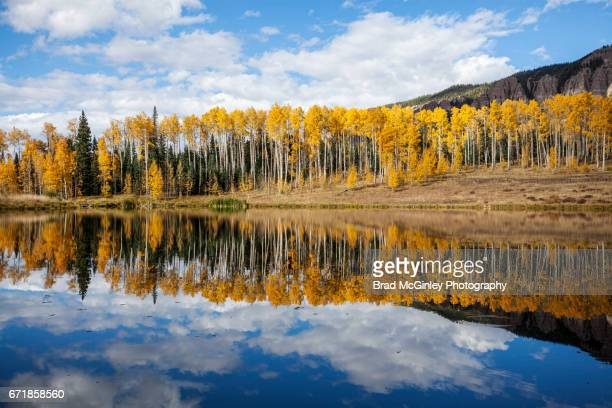 yellow and blue - aspen tree stock pictures, royalty-free photos & images