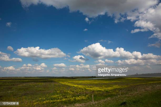 Yellow and green landscape under a blue sky with clouds