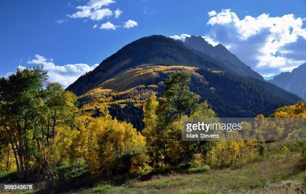 yellow and greens of white river national forest - white river national forest stock photos and pictures