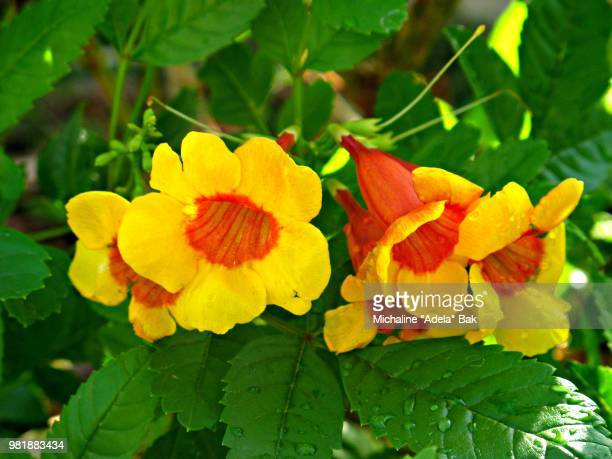 Yellow And Orange Bell Flowers