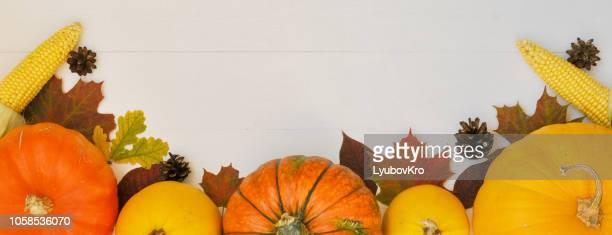 yellow and orange pumpkinscorn, cones and autumn leaves on white wooden background for harvest fall and thanksgiving theme. cornucopias. banner - happy thanksgiving banner stock pictures, royalty-free photos & images