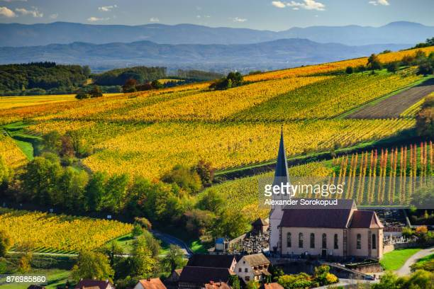 yellow and orange vineyards in littl village andlau,alsace,france. colorful autumnal landscape. - france stock pictures, royalty-free photos & images