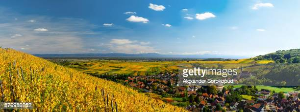 Yellow and orange vineyards in littl village Andlau,Alsace,France. Colorful autumnal landscape.