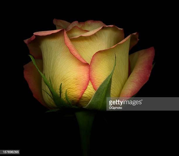 jaune et rouge rose - ogphoto photos et images de collection