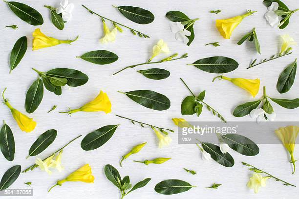 Yellow and white flowers and green leaves pattern on white background