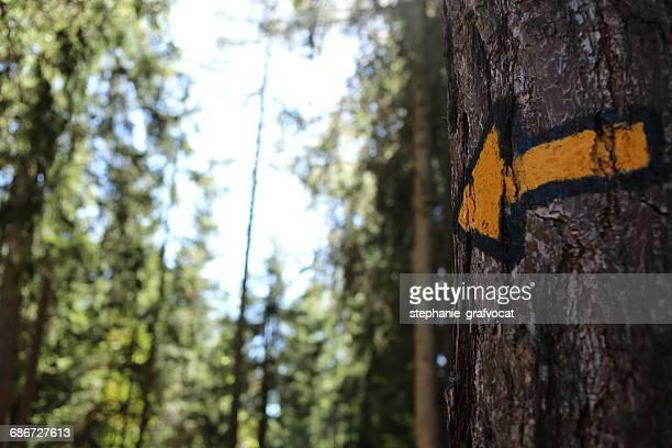 Yellow arrow on a tree trunk