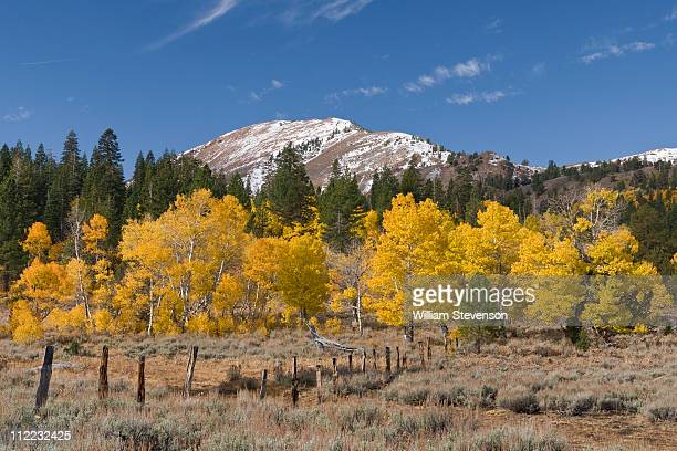 yellow aspens beneath a snow covered mountain in hope valley in the sierra mountains of california - hope imagens e fotografias de stock