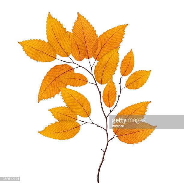 Yellow Autumn Branch