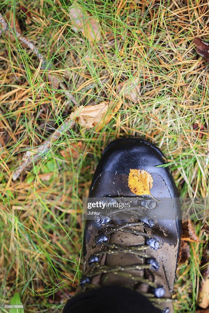 Gialla foglia d'autunno su una scarpa da trekking : Foto stock