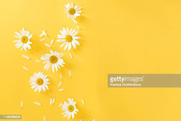 yellow background with chamomile pattern. flat layer, top view. - petal stock pictures, royalty-free photos & images