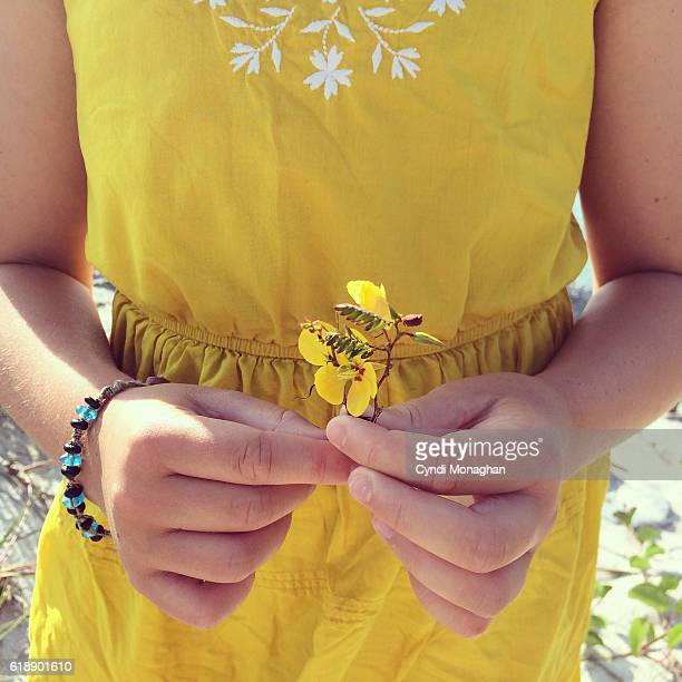 Yellow Beach Flower