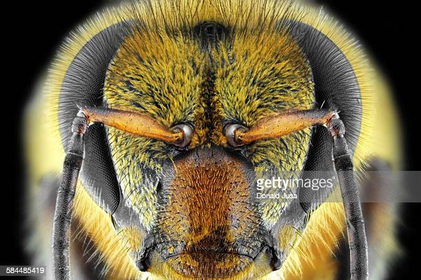 yellow bee - honey bee stock pictures, royalty-free photos & images