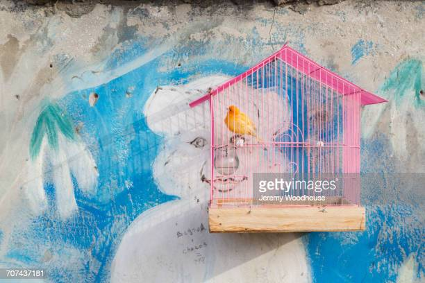 Yellow bird in pink birdcage hanging on wall