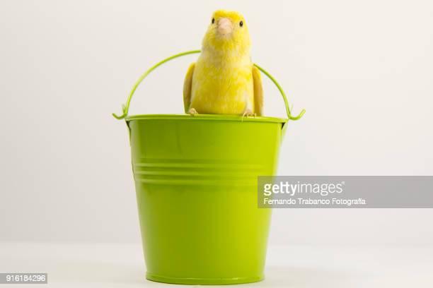 yellow bird - objet vert photos et images de collection