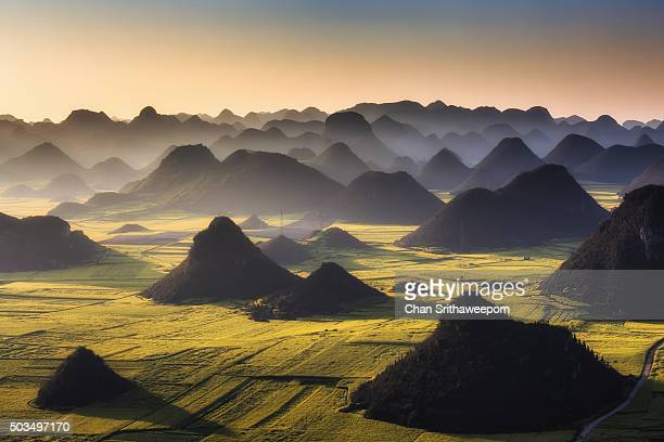 yellow blooming oil seed rape plants, luoping,yunnan, china - yunnan province stock pictures, royalty-free photos & images