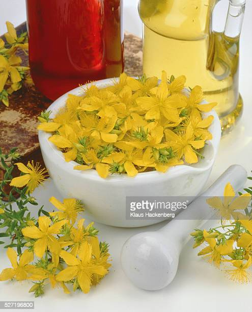 Yellow blossoms of St. John's wort in a bowl