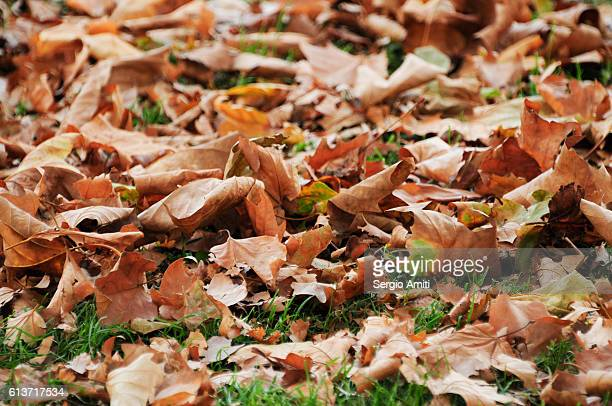 Yellow, brown and orange autumn leaves covering grass