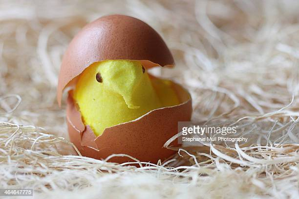 yellow candy chick in brown egg shell - easter candy stock pictures, royalty-free photos & images
