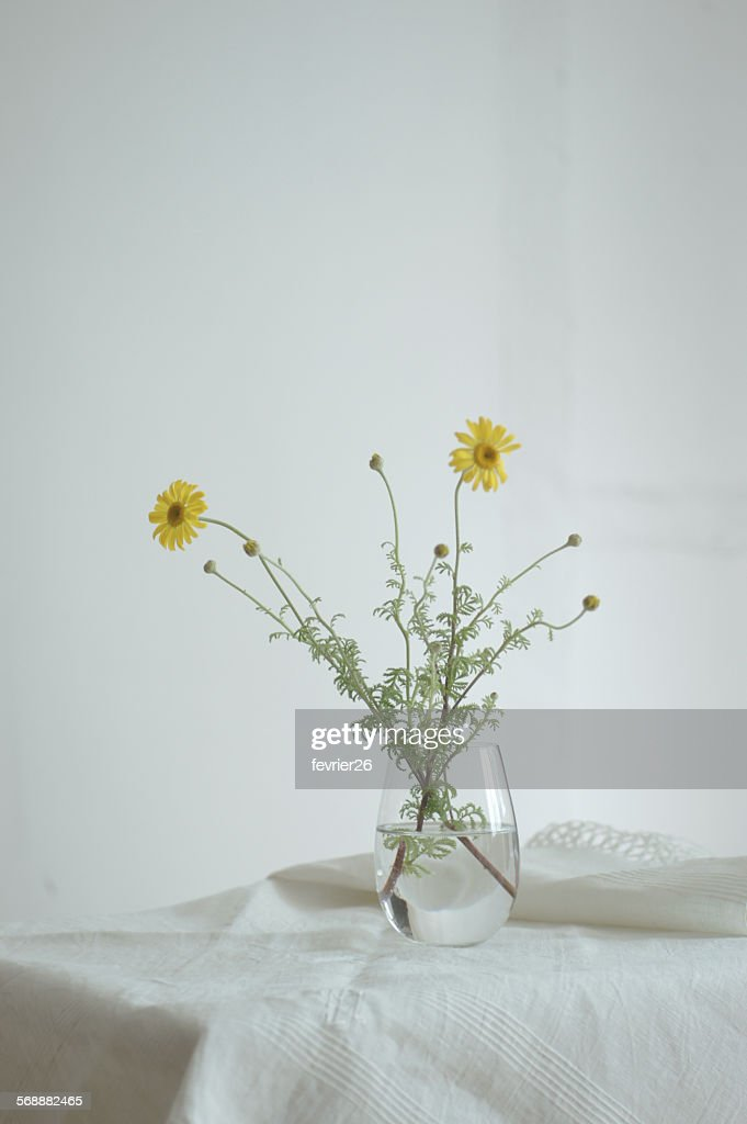 Yellow chamomile in glass : Stock Photo