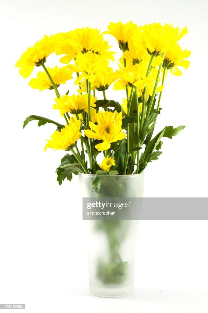 Yellow Chrysanthemum Flower In Glass Vase On White Background Stock