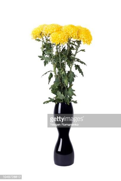 yellow chrysanthemum in a black vase - 束 ストックフォトと画像