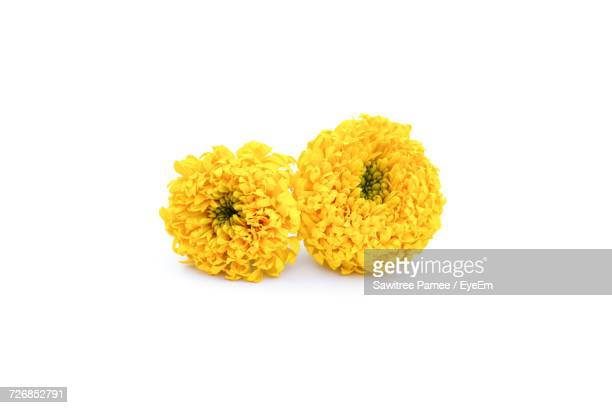 Yellow Chrysanthemums On White Background