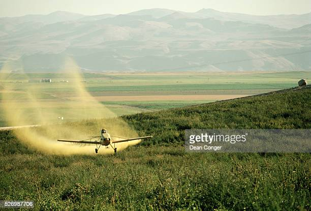 A yellow cropduster plane sprays a potato field in Nampa Idaho