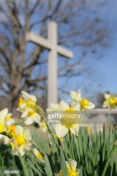 Yellow Daffodils in Front of a White Cross