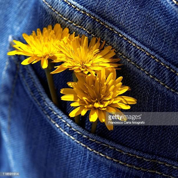 Yellow daisies into at pockets