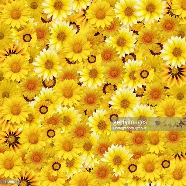 Marguerite jaune texture floral
