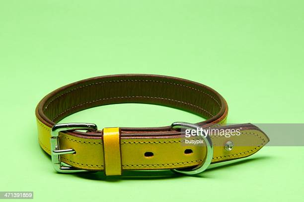 yellow dog collar - collar stock pictures, royalty-free photos & images