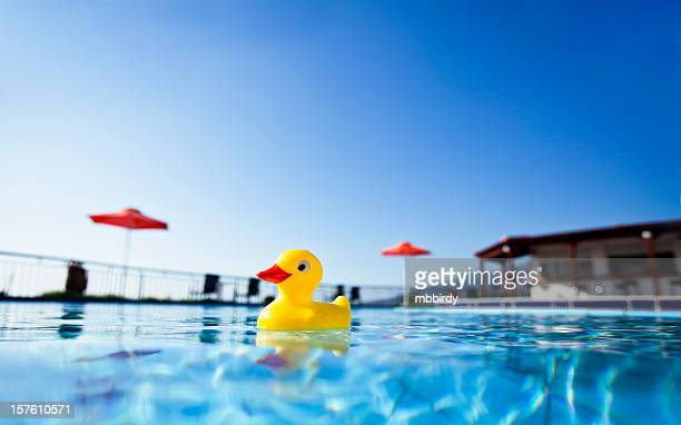 Yellow duck in swimming pool