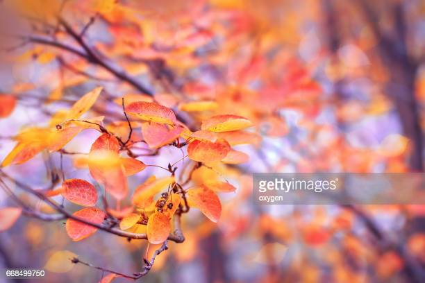 yellow fall leaves, autumn background - november background stock photos and pictures